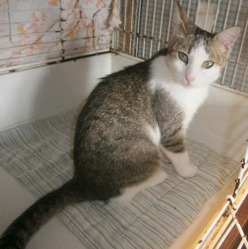 Umisťovací výstava koček bez domova